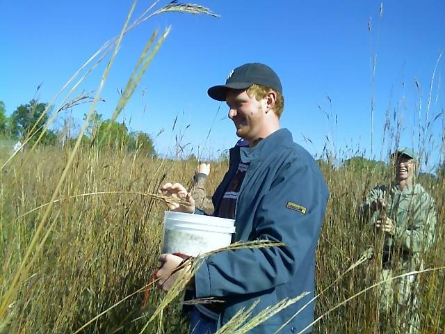 Collecting native grass seed